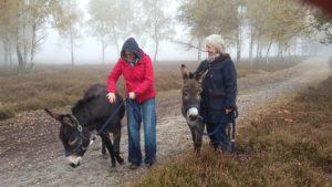 Wanderung mit Eseln durch die Nemitzer Heide
