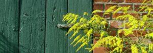 Gartendetail der Pension Weidenbaum und Wildhecke